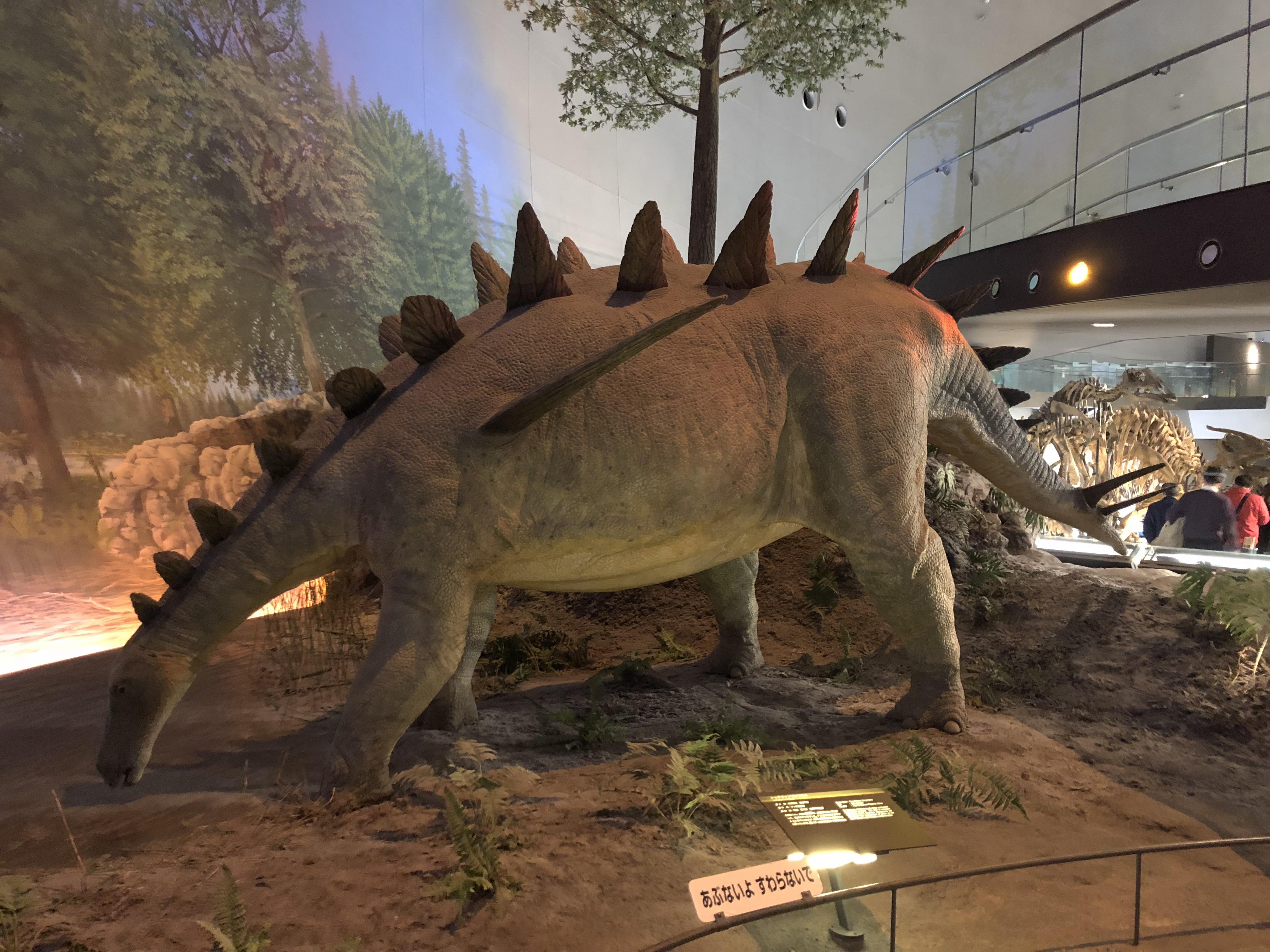 恐竜博物館🦕佐々木