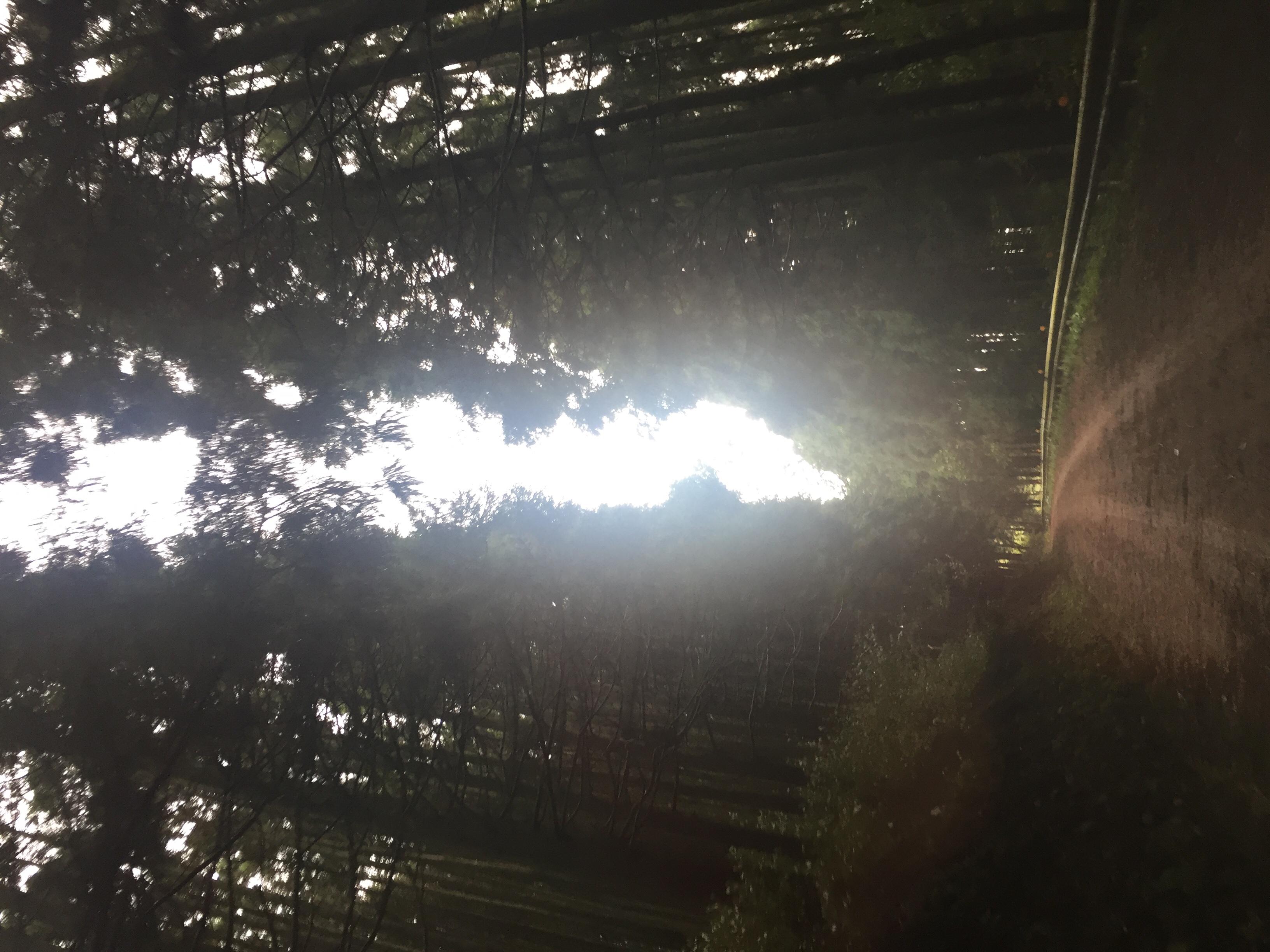 和歌山県生石高原🌿岡山