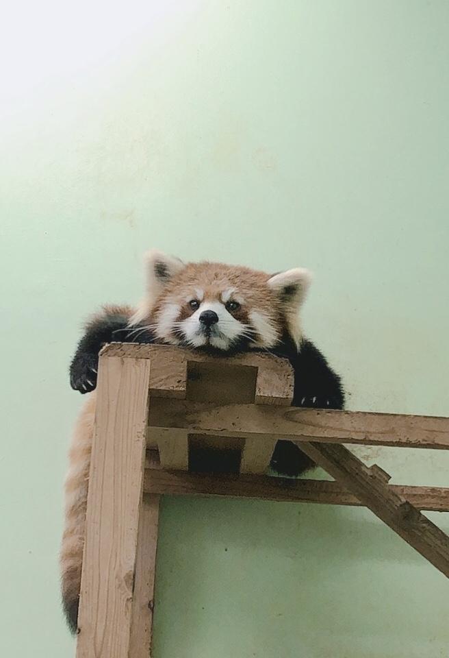 動物園とディズニー🐭 DH磯田