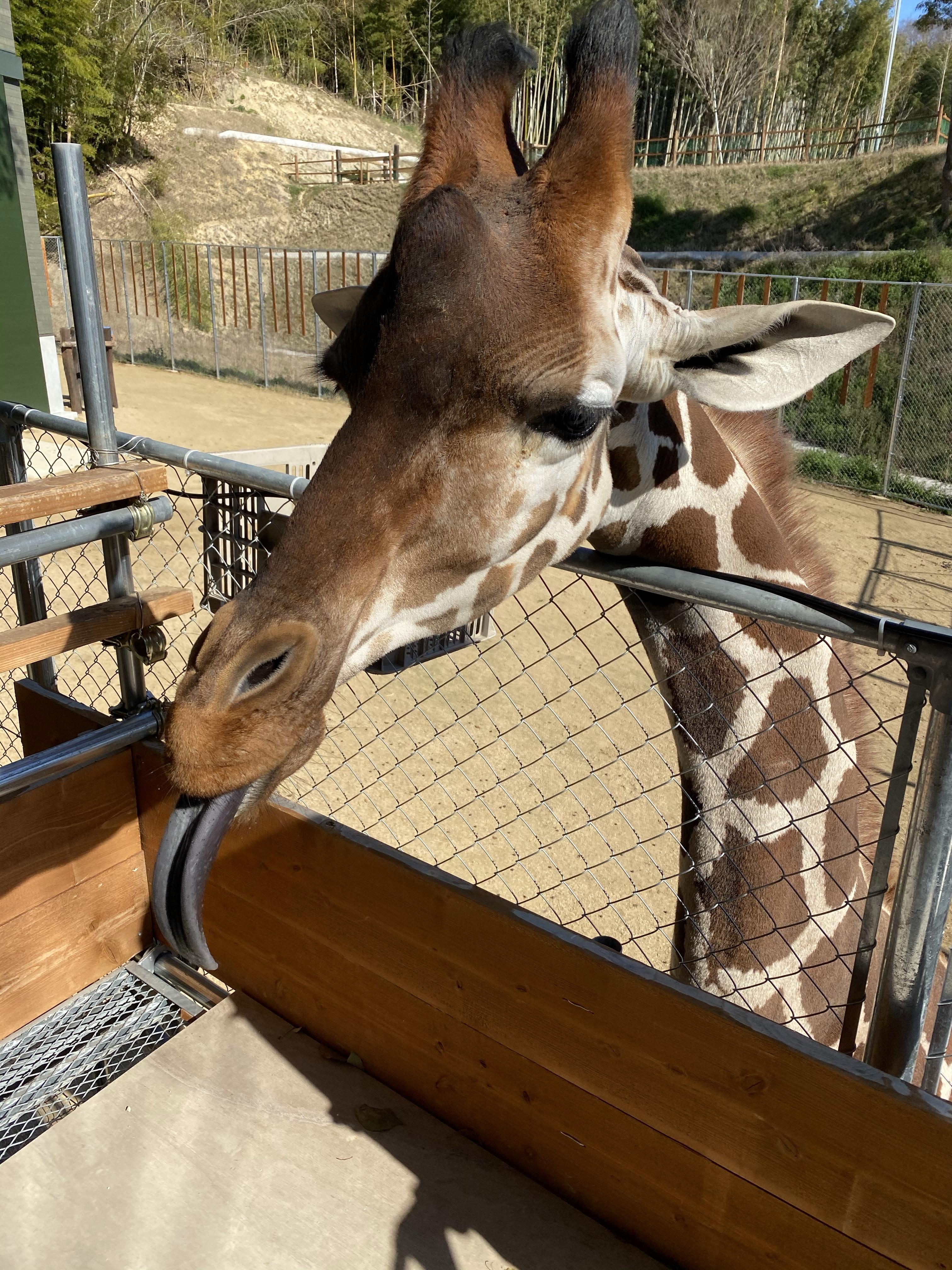 しろとり動物園🐯しば