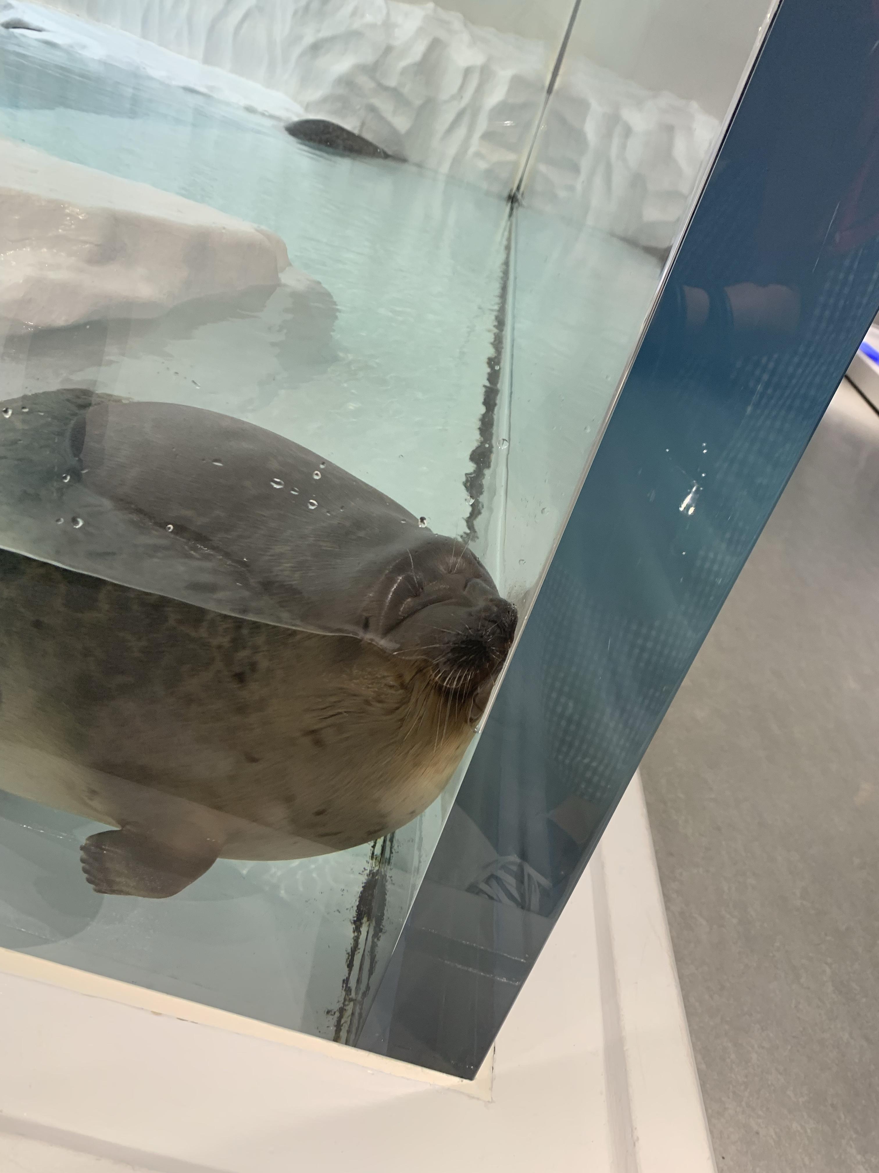 海遊館🐟🐟🐟🐟 DA今福